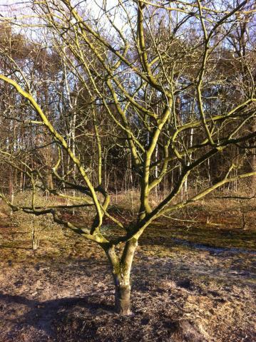 siegbert-van-reeth-boomkwekerij-plantas_IMG_1140