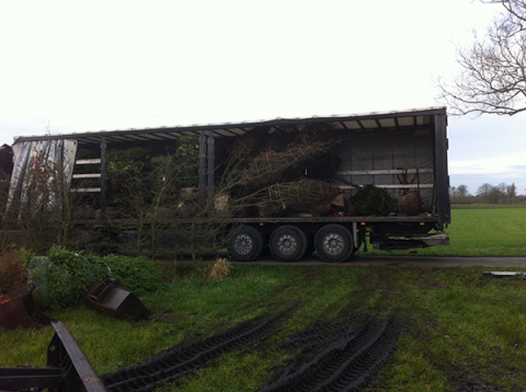 siegbert-van-reeth-boomkwekerij-plantas_IMG_2151