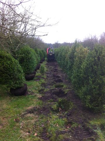 siegbert-van-reeth-boomkwekerij-plantas_IMG_2279