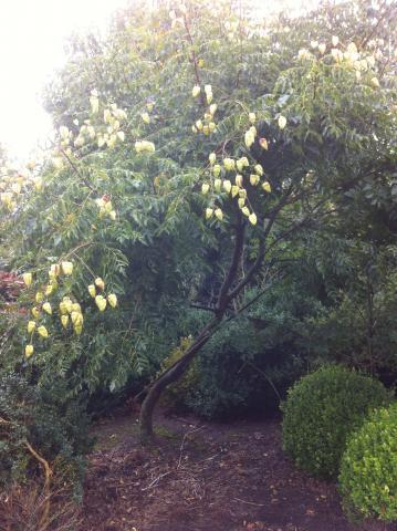 siegbert-van-reeth-boomkwekerij-plantas_IMG_2980_0