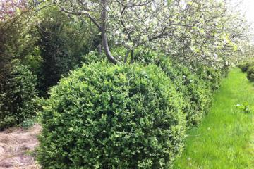 siegbert-van-reeth-boomkwekerij-plantas_IMG_1443