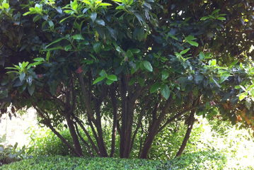 siegbert-van-reeth-boomkwekerij-plantas_IMG_1562