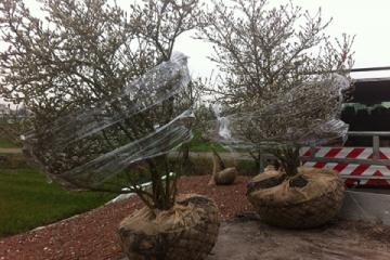 siegbert-van-reeth-boomkwekerij-plantas_IMG_2283
