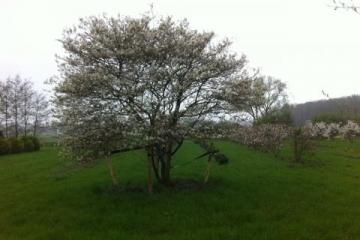 siegbert-van-reeth-boomkwekerij-plantas_IMG_2637