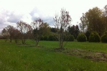 siegbert-van-reeth-boomkwekerij-plantas_IMG_2645