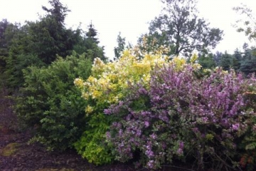 siegbert-van-reeth-boomkwekerij-plantas_IMG_2762